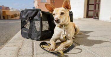 Travel Pet Accessories